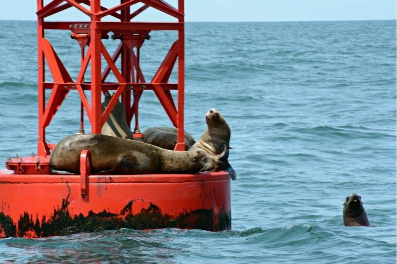 Depoe Bay Sea Lions