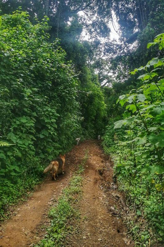 El pilar trail