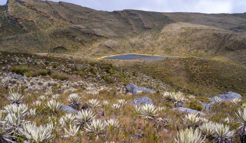 Chingaza National Park paramo